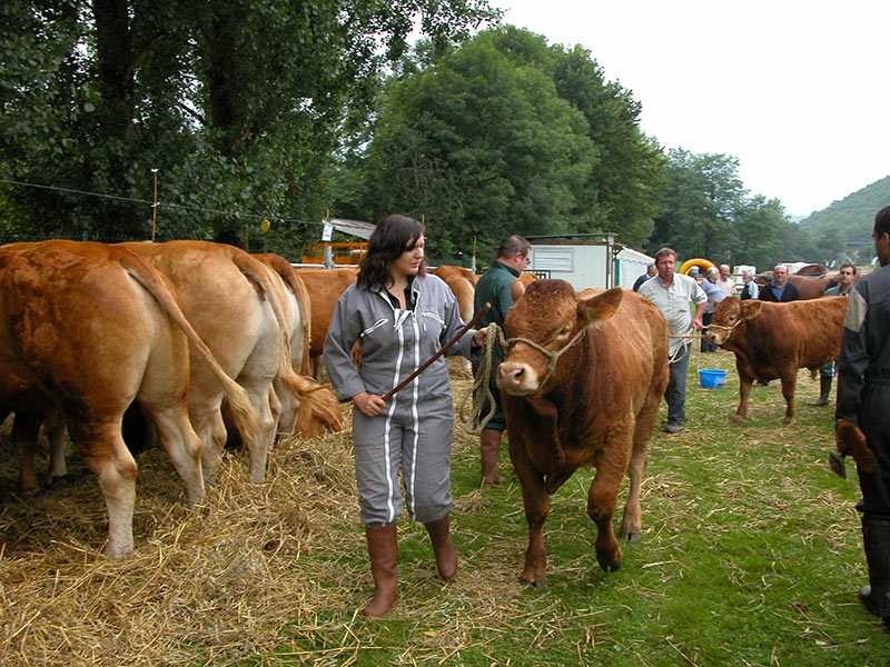 comice-agricole-lanteuil-association